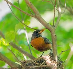 Bird Outside My WIndow