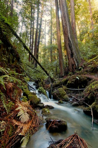 Redwoods and West Berry Creek