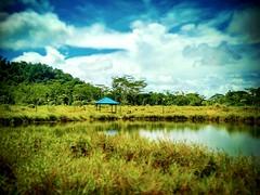 Petra Jaya, Sarawak https://goo.gl/maps/nSnZ4EALGGF2  #travel #holiday #Asian #Malaysia #Sarawak #Kuching #travelMalaysia #holidayMalaysia #旅行 #度假 #亚洲 #马来西亚 #沙拉越 #古晋 #trip #马来西亚旅行 #traveling #马来西亚度假  #tree #grass #nature #大自然 #休息站 #restingstop #PetraJaya