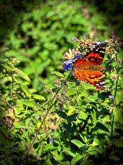 Macro Flower and Butterly 1