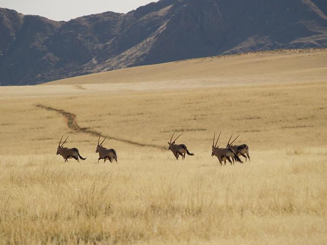 NAMIBIA - WOLWEDANS