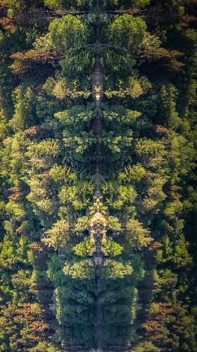 La nature en Totem