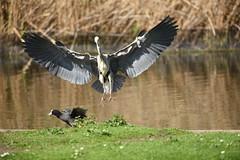 Heron Landing - 1, Regent's Park, London