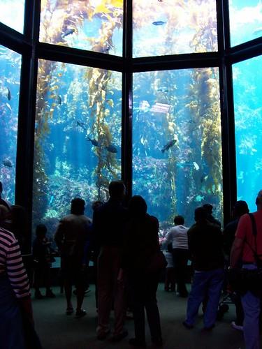 Kelp Forrest at Monterey Bay Aquarium