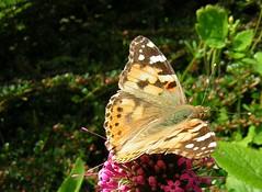 She's a butterfly...