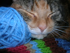 QE likes my yarn.
