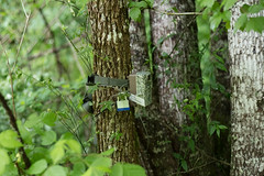 Mapping trail cameras