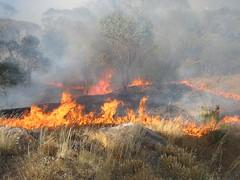 Bush Fire Getting Too Close