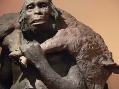 Model of Neandertal Man whose skeleton was fir...