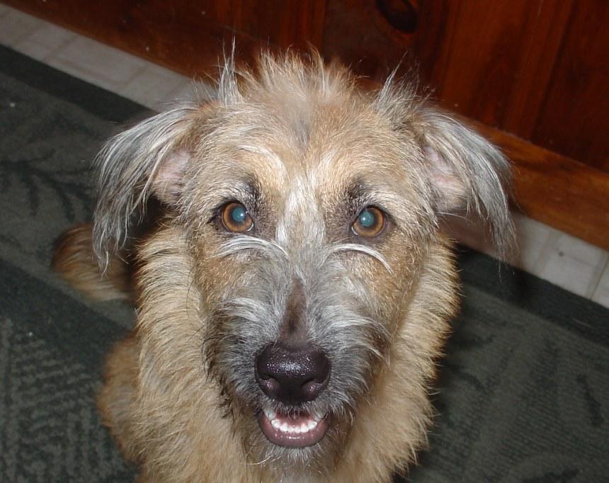 My New Dog : Nina