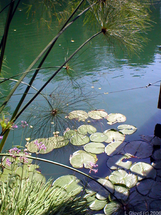 Papyrus and Lily Pads by Lori Gloyd