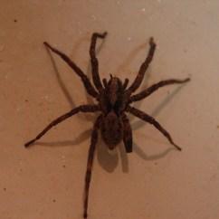 Kitchen To Go Brizo Faucet Mr. Spider | Flickr - Photo Sharing!