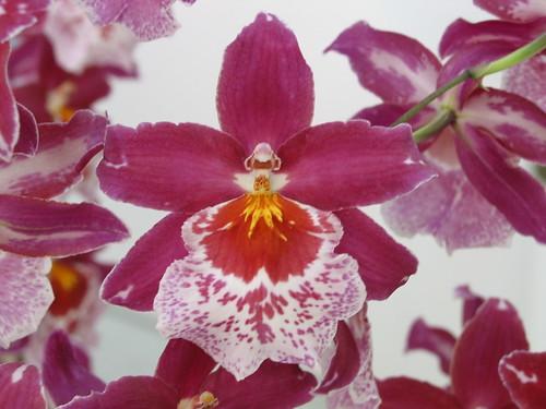 Orquídeas y conjuntos de Mandelbrot