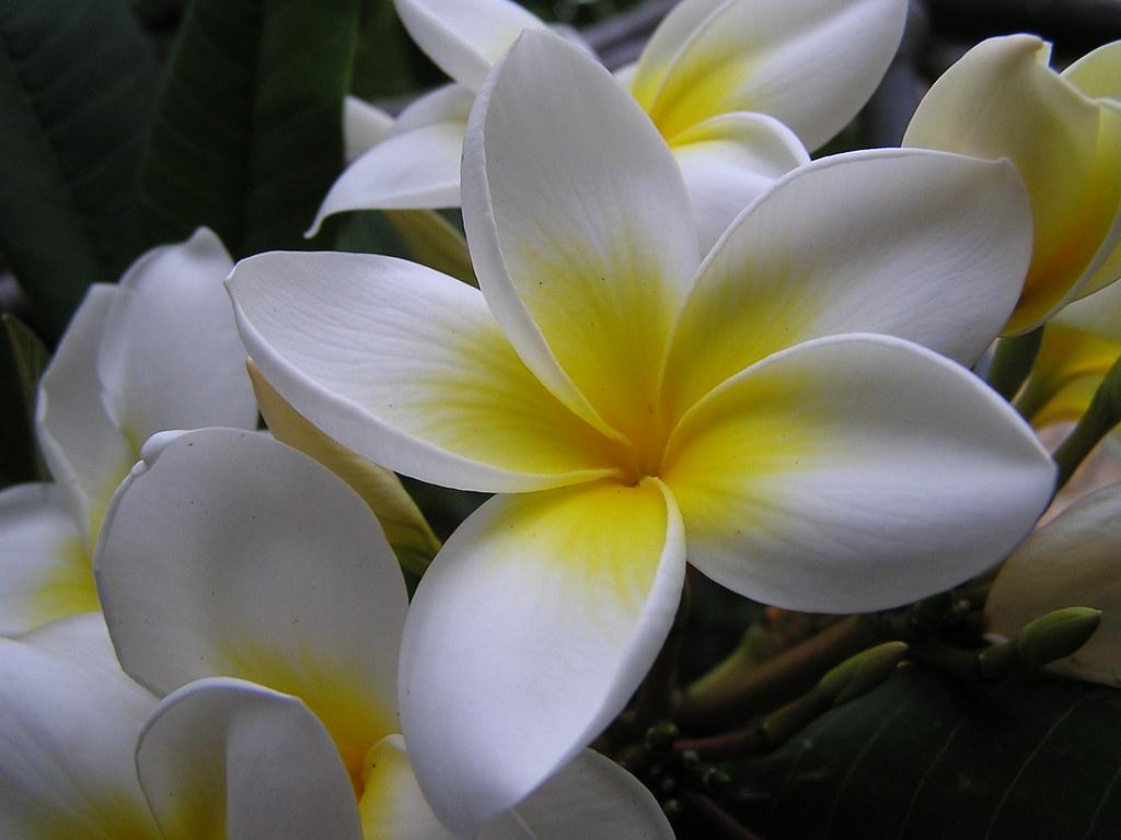 flores Isla de La Gomera 0249