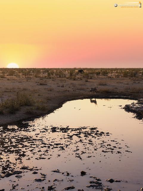 Gemsboks on the waterhole