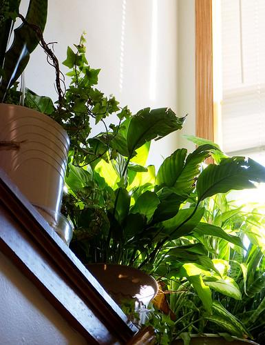 0130 Stairway Jungle