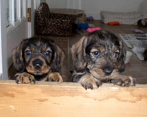 Jan. 20 Anneliese and Arnie