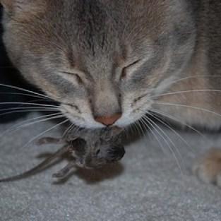mouse kill