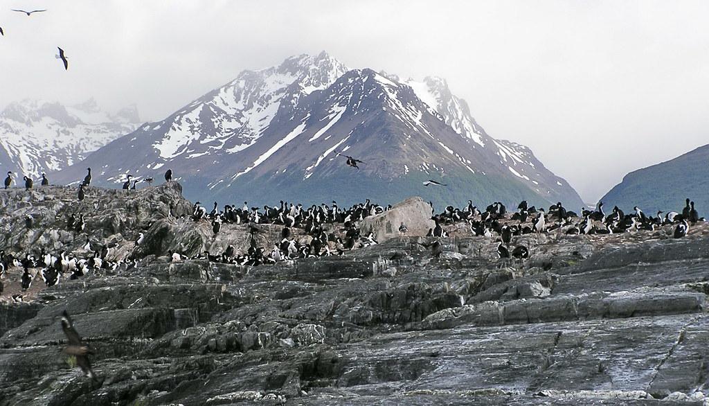 pinguinos Isla de los Pajaros Ushuaia Canal Beagle Argentina 128