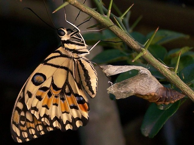 Metamorphosis: Free as a Butterfly and Ready to Fly