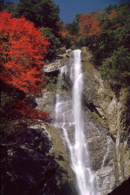 Kouyou Maple at Sendantodoro-no-taki 栴壇轟の滝 八代 紅葉