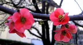Spring, spring, spring