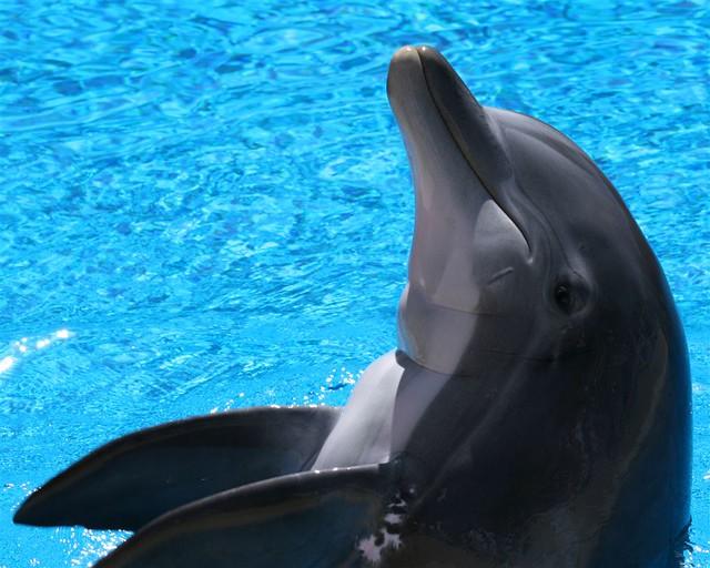 Dolphin - 5