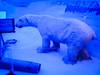 Polar bear (1)
