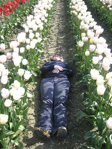 Dead By goldberg cc: flickr