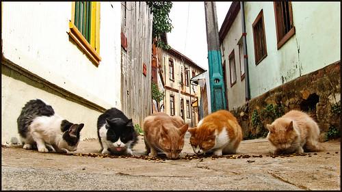 La hora de colación se respeta - Valparaiso