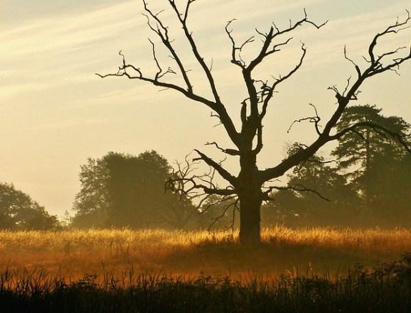 landscape of dead tree