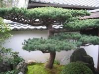 Japan-Kyoto-Daitoku-Ji-Zen-Buddhist-Temple-Daisen-In-Zen ...