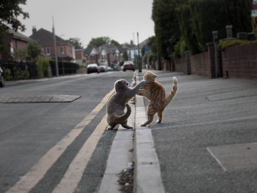 Two cats fighting in the street