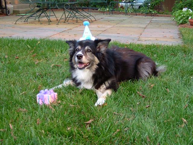 Birthday Dog!