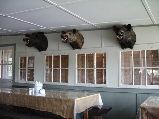 Three Boars, Taxidermy, at Ezell's Fish Camp, Lavaca AL