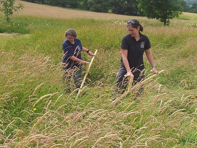 Wildlife Trust learn to scythe