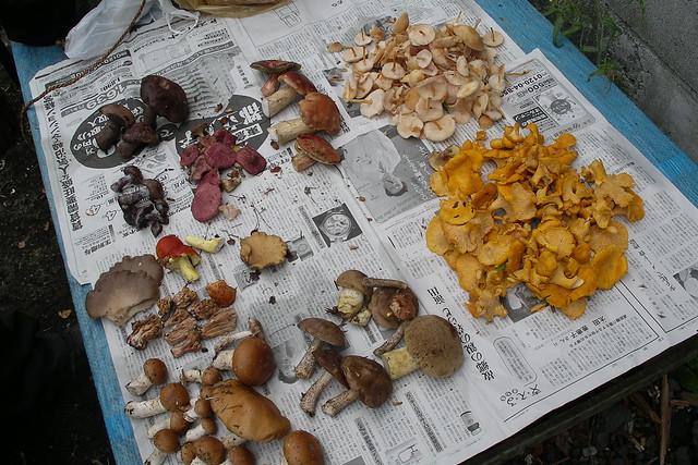 fuji mushrooms