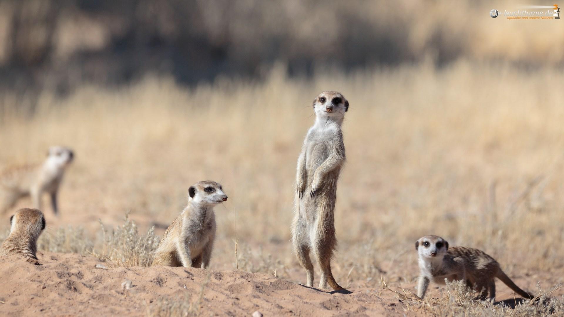 Guardians of the Kgalagadi