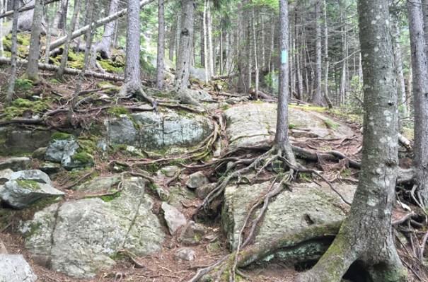 Bigelow Moose Falls Climb