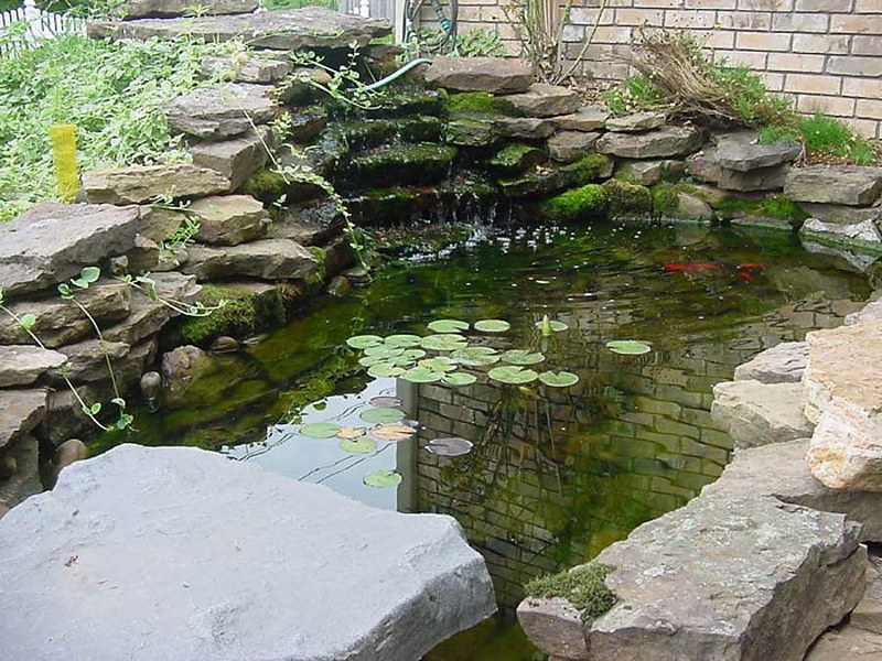 Top 50 garden pond designs that will rock your world for Garden pond design