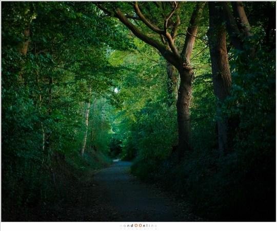 Een holle weg in de schemering. De weg is al in duisternis gehuld voordat het licht van de dag verdwenen is.