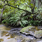 Viajefilos en Australia. Blue Mountains 040