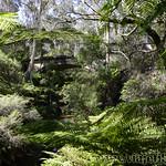 Viajefilos en Australia. Blue Mountains 039