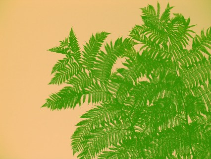 Soquel Tree