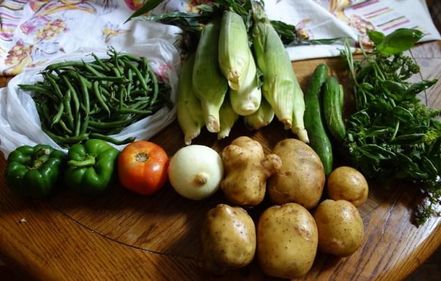 Homestead Creamery Vegetable Delivery Week 11
