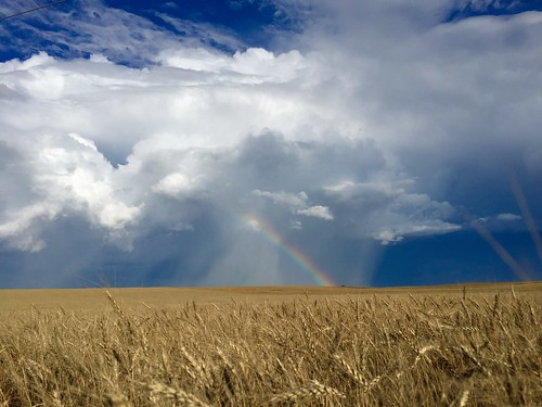 Z Crew: rainbow over wheat