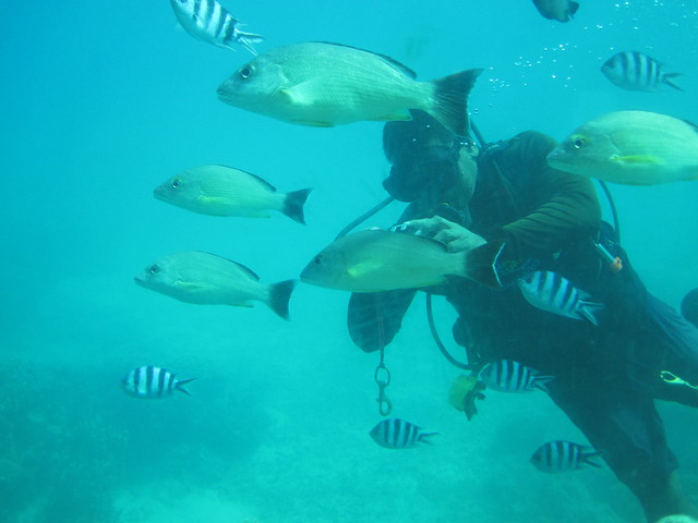 Picture from Fish Eye Marine Park