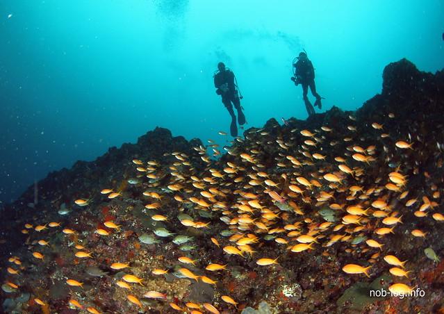 金魚とダイバー