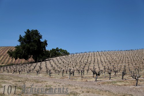 Paso Robles Wine Tour