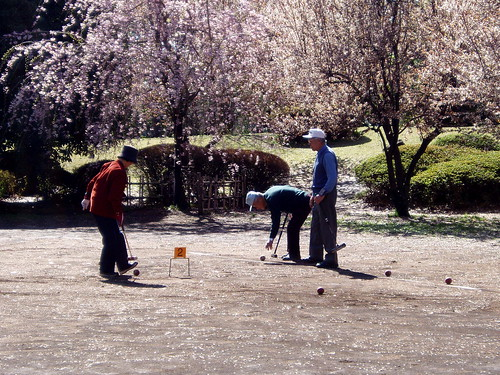 gate ball under the cherry blossoms (桜) #1192